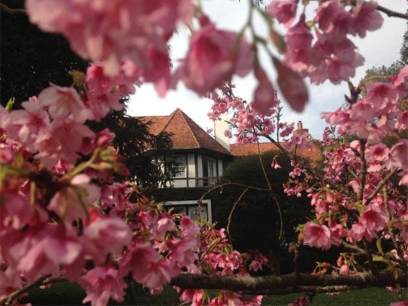O Jardim de Karolina – construindo um sonho