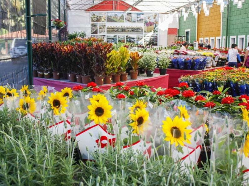 Enflor & Garden Fair: edição 2018 supera expectativas de público