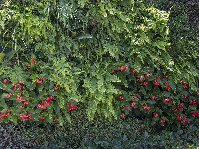 Green Wall Ceramic oferece soluções ambientais e o cultivo de diversas espécies de plantas em ambientes externos e internos