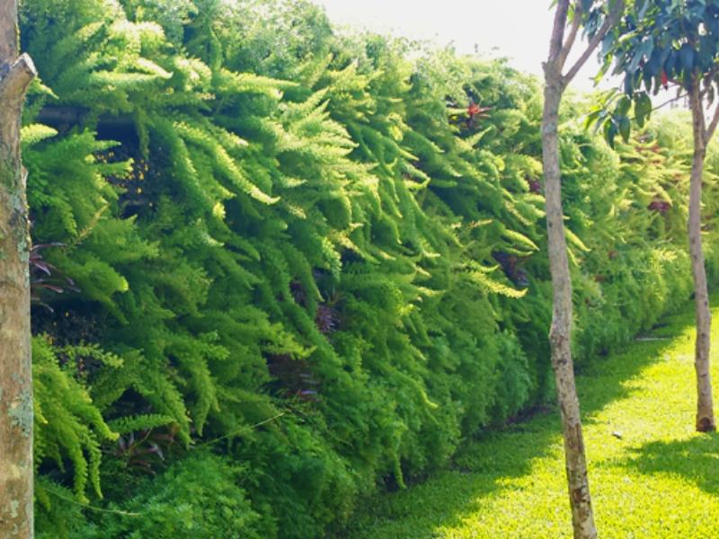Jardins verticais são ótimas opções para decorar e diminuir efeitos da poluição das grandes cidades
