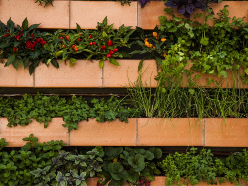 Garden Wall da dicas sobre hortas verticais